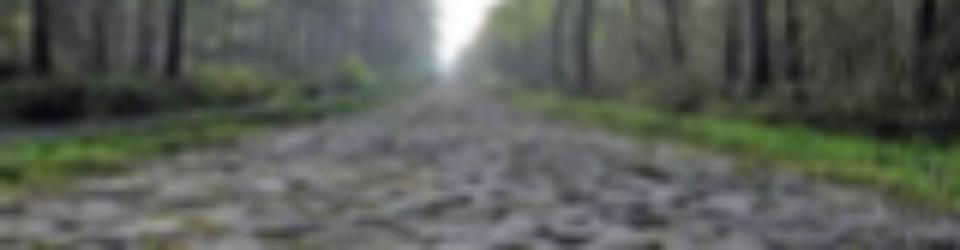 Rock path through forest
